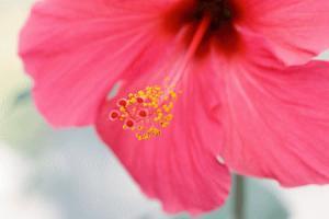 flower14.jpgのサムネール画像